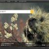 BingでIPアドレスを検索することで共用サーバーのWebサイト一覧がわかる